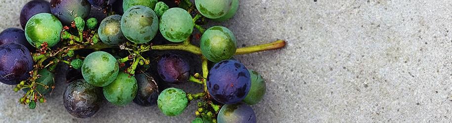 Bekendste wijn en druivensoorten
